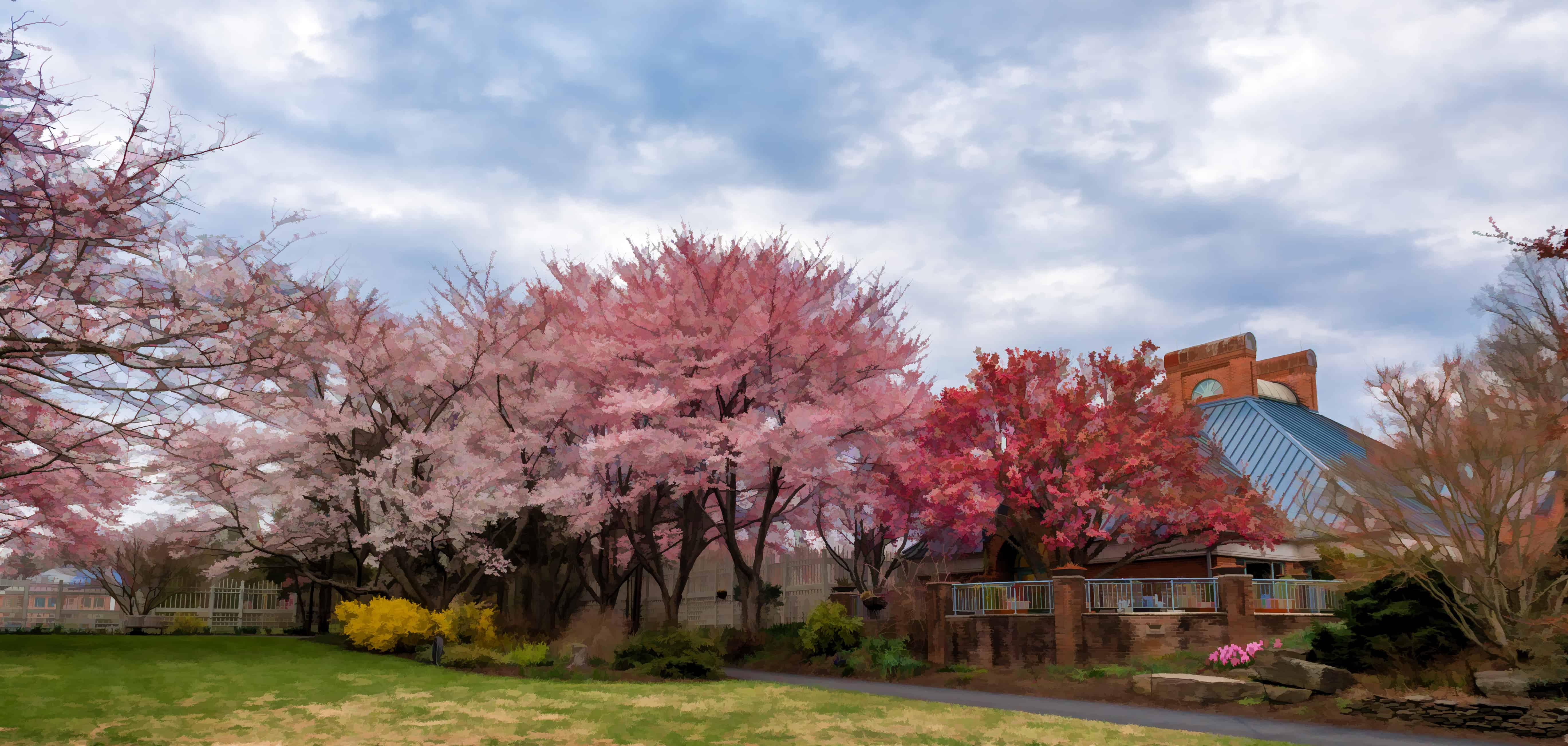 Tour Of The Bonsai Pavilion And Bonsai Care Demonstration National Cherry Blossom Festival